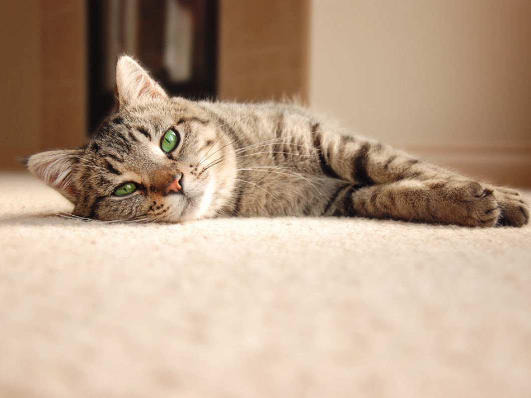 3 things that set Divine Care Carpet Cleaning apart